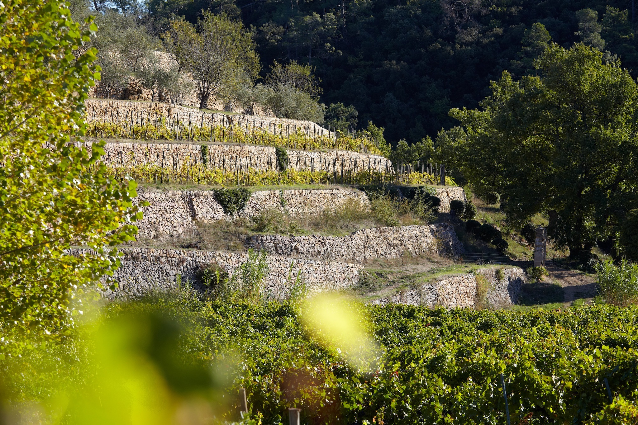 Vignes de Miraval 4